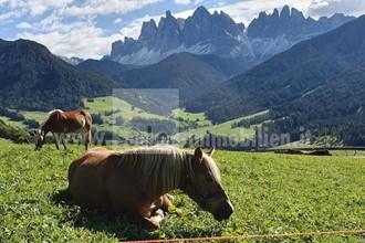 Geschlossener Bauernhof mit Stadel in traumhafter Panoramalage auf die Geisler Berge zu verkaufen