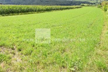 Landwirschaftliche Fläche in Bauerwartungsgebiet in stategisch günstiger Lage am Nordring von Bruneck zu verkaufen